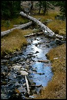 Snake Creek in fall. Great Basin National Park, Nevada, USA.