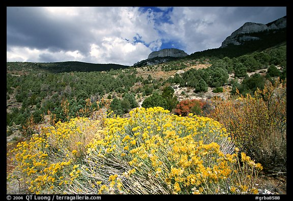Sage in bloom and Snake Range. Great Basin National Park (color)