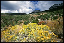 Sage in bloom and Snake Range. Great Basin National Park ( color)