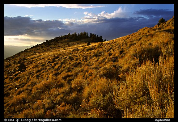 Sage covered slopes at sunset, Snake Range. Great Basin National Park (color)