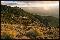 Sage covered slopes and Spring Valley. Great Basin National Park, Nevada, USA. (color)