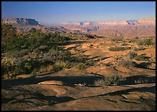 Rock slabs on  Esplanade, early morning. Grand Canyon National Park, Arizona, USA.