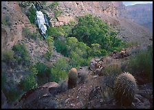 Barrel cacti and Thunder Spring, early morning. Grand Canyon National Park, Arizona, USA.