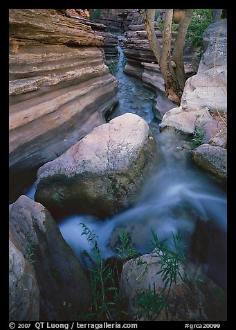 Entrance of Deer Creek Narrows. Grand Canyon National Park, Arizona, USA.