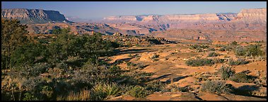 Esplanade Plateau scenery. Grand Canyon National Park (Panoramic color)
