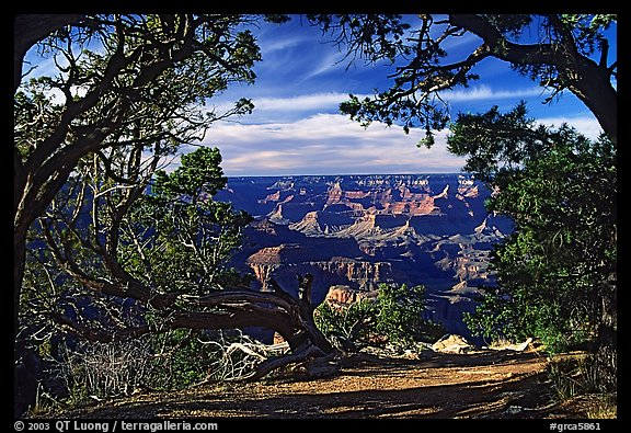 Grand Canyon framed by trees. Grand Canyon National Park (color)