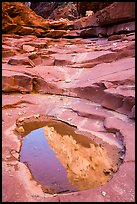 Reflection in pool, North Canyon. Grand Canyon National Park ( color)