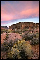 Sage flowers, wall, and cloud, Surprise Valley, sunset. Grand Canyon National Park, Arizona, USA.