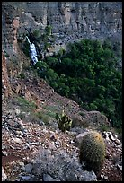 Barrel cactus and Thunder Spring, early morning. Grand Canyon National Park, Arizona, USA. (color)