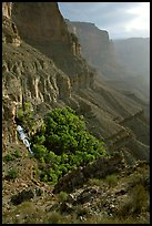 Thunder Spring and Tapeats Creek, morning. Grand Canyon National Park, Arizona, USA. (color)