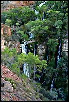 Trees and Thunder River lower waterfall. Grand Canyon National Park, Arizona, USA. (color)