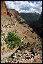 Backpacker on switchbacks above Tapeats Creek. Grand Canyon National Park, Arizona, USA.
