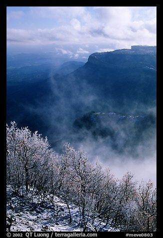 Snowy trees, cliffs, and clearing storm, Park Point, morning. Mesa Verde National Park, Colorado, USA.