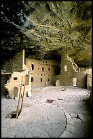 Ladder emerging from Kiva and Spruce Tree house. Mesa Verde National Park, Colorado, USA. (color)