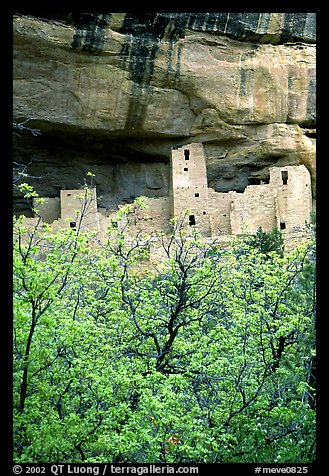Trees with spring leaves and Cliff Palace, morning. Mesa Verde National Park (color)