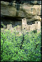 Trees with spring leaves and Cliff Palace, morning. Mesa Verde National Park, Colorado, USA.
