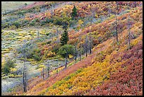 Shrub-steppe plant community in autumn. Mesa Verde National Park, Colorado, USA. (color)