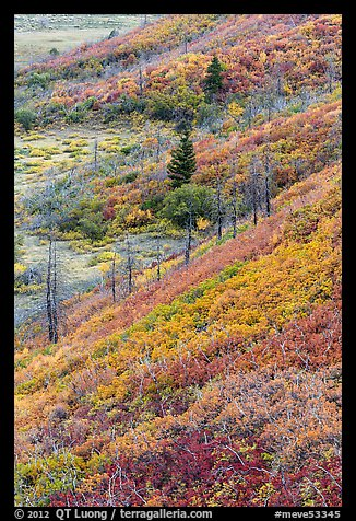 Fall color over shrub slopes. Mesa Verde National Park (color)