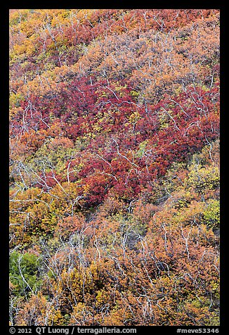 Burned slope with shrub-steppe plants in fall colors. Mesa Verde National Park (color)