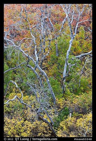 Burned trees and rabbitbrush in the fall. Mesa Verde National Park (color)