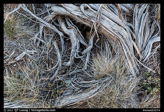 Close up of grasses and roots. Mesa Verde National Park (color)