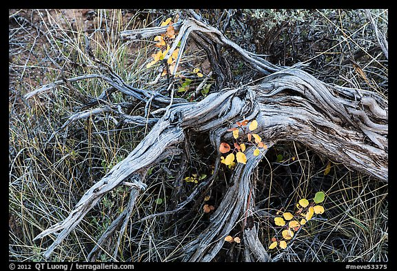 Close up of leaves, fallen wood and grasses. Mesa Verde National Park (color)