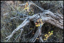 Close up of leaves, fallen wood and grasses. Mesa Verde National Park ( color)
