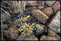 Close up of flowers and rocks used in Ancestral Puebloan structures. Mesa Verde National Park ( color)