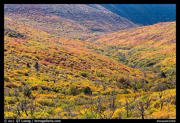 Slopes covered with shrubs in brillant autumn color. Mesa Verde National Park (color)
