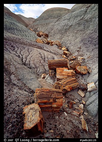 Triassic Era petrified logs and Blue Mesa. Petrified Forest National Park (color)