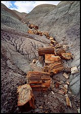 Triassic Era petrified logs and Blue Mesa. Petrified Forest National Park, Arizona, USA.