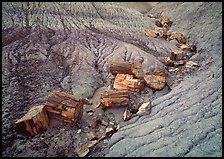Petrified logs in Blue Mesa. Petrified Forest National Park, Arizona, USA.