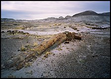 Long petrified log, and Chinle Formation rocks, Long Logs area. Petrified Forest National Park, Arizona, USA.