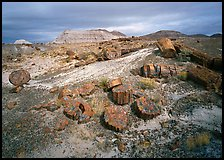 Petrified log and prehistoric-looking badlands. Petrified Forest National Park, Arizona, USA. (color)