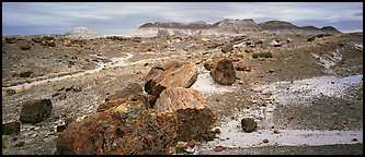 Landscape of colorful petrified logs and badlands. Petrified Forest National Park (Panoramic color)