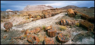 Colorful sections of petrified wood. Petrified Forest National Park (Panoramic color)