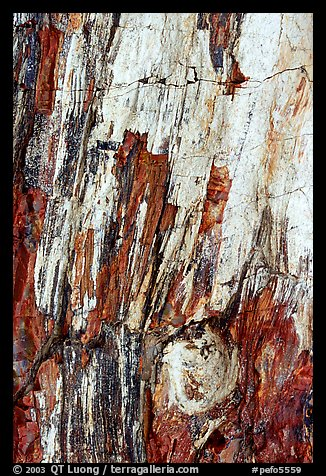 Detail of Triassic Era fossilized wood. Petrified Forest National Park (color)