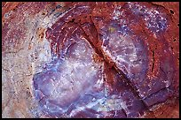 Petrified wood close-up. Petrified Forest National Park, Arizona, USA. (color)