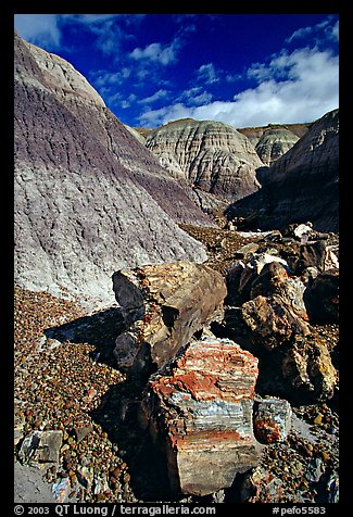 Colorful fossilized logs in Blue Mesa, afternoon. Petrified Forest National Park (color)