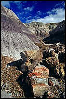 Colorful fossilized logs in Blue Mesa, afternoon. Petrified Forest National Park ( color)