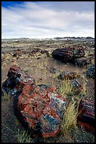 Multi-hued large petrified logs and badlands in Long Logs area. Petrified Forest National Park, Arizona, USA.