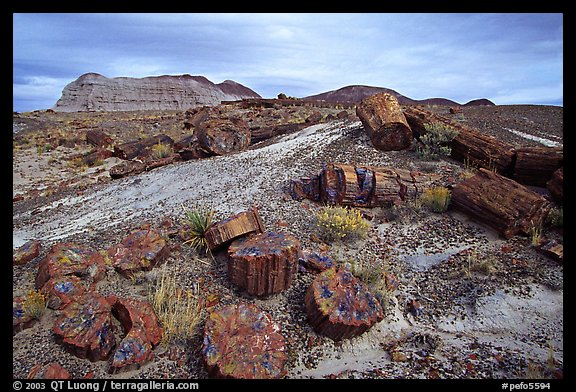 Picture Photo Colorful Slices Of Petrified Wood And