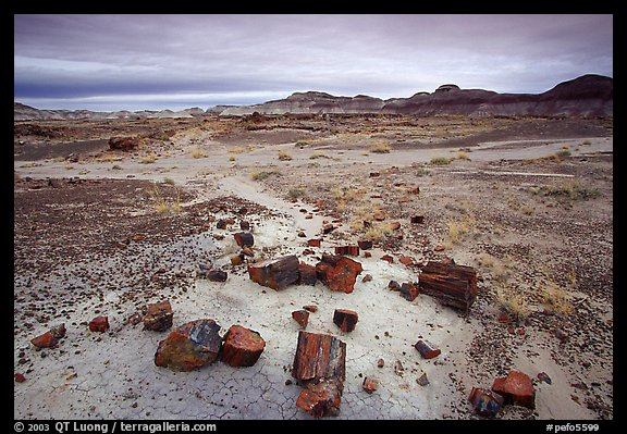Multi-hued slices of petrified wood and mudstone hills, Long Logs area. Petrified Forest National Park, Arizona, USA.