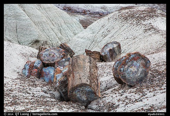 Broken logs of colorful petrified wood, Crystal Forest. Petrified Forest National Park (color)