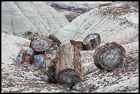 Broken logs of colorful petrified wood, Crystal Forest. Petrified Forest National Park ( color)