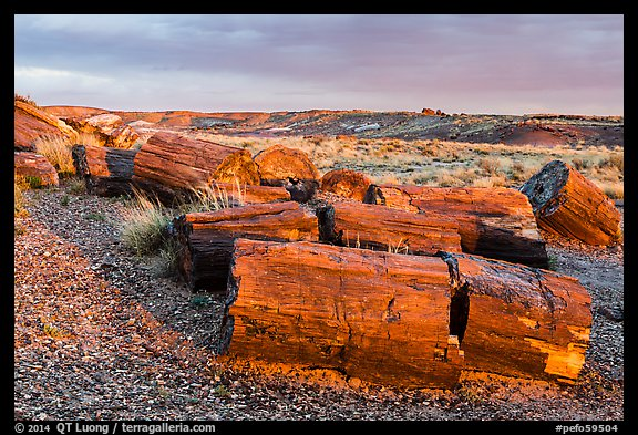 Last light illuminates large petrified wood logs, Crystal Forest. Petrified Forest National Park (color)