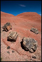 Petrified wood on red badlands,. Petrified Forest National Park ( color)