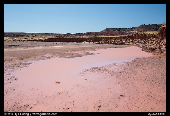 Water in Lithodendron Wash. Petrified Forest National Park (color)