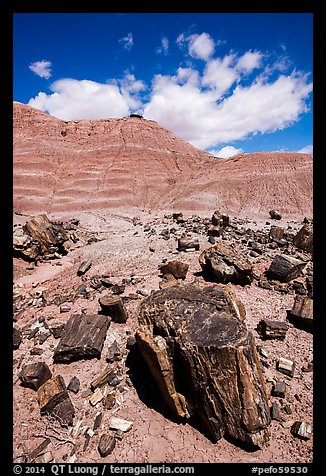 Black petrified wood and red Painted Desert badlands. Petrified Forest National Park (color)