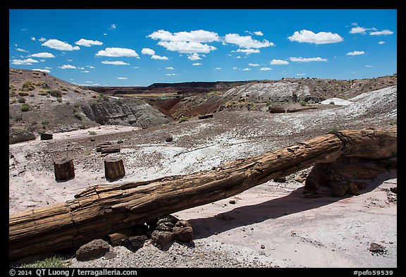 Onyx Bridge, petrified log spanning arroyo. Petrified Forest National Park (color)